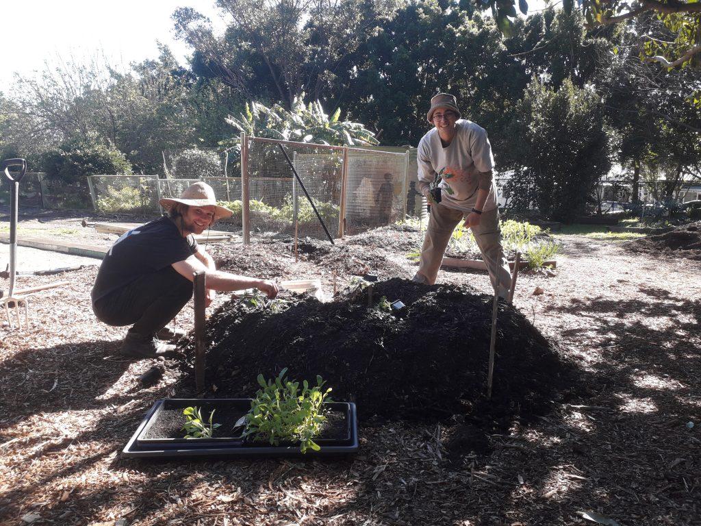 Two people planting seedlings