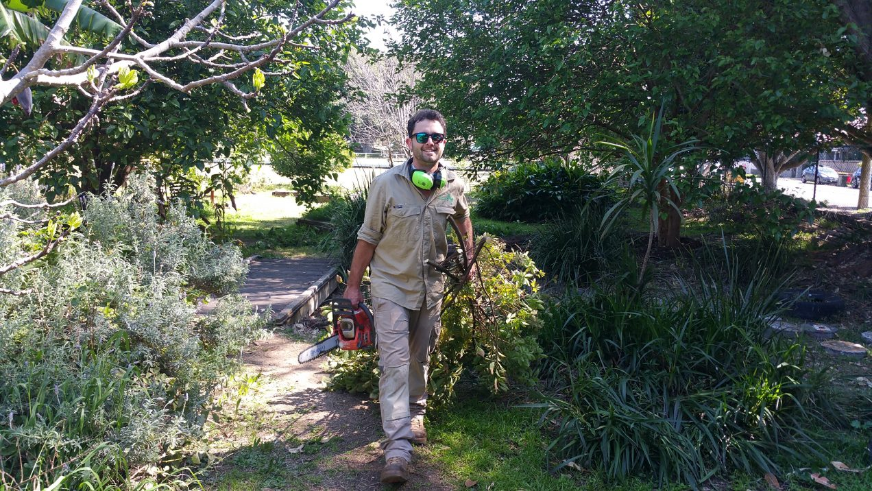 Man carrying chansaw and some branches through a garden.